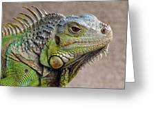 Iguana Profile Greeting Card
