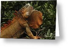 Iguana Costa Rica Greeting Card