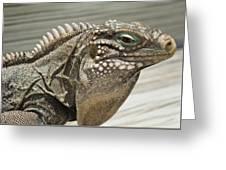 Iguana Two Greeting Card