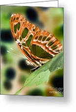 Illuminated Butterfly Greeting Card