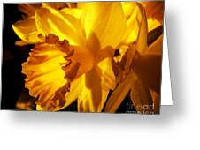 Illuminated Daffodil Photograph Greeting Card