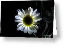 Illuminated Daisy Photograph Greeting Card