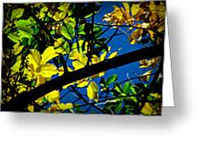 Illuminated Elm Leaves Greeting Card