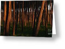 Illuminated Forest Greeting Card