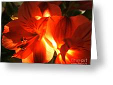 Illuminated Red Orange Alstromeria Photograph Greeting Card