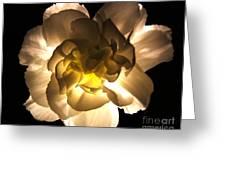 Illuminated White Carnation Photograph Greeting Card