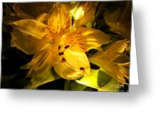 Illuminated Yellow Alstromeria Photograph Greeting Card