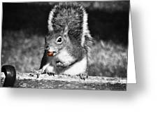 I'm A Nut Black And White Greeting Card