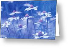 Imagine 06ht01 Greeting Card by Variance Collections
