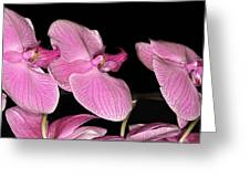 Img8383 Greeting Card