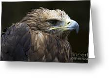 Imperial Eagle 4 Greeting Card