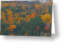 Imprssions Of Autumn Greeting Card