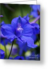 In A Blue Mood Greeting Card