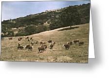 In A Pasture Near Pleasanton Hereford Greeting Card