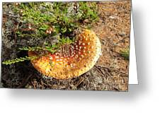 In Autum Forest Greeting Card