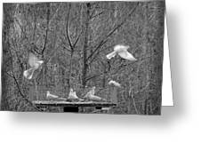 In Coming Taking Off Greeting Card