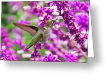 In Flight Greeting Card