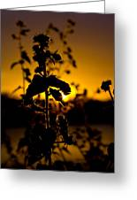 In Sunset's Glow Greeting Card