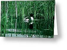 in the Bulrushes Greeting Card