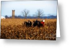 In The Corn 1 Greeting Card