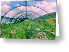 In The Greenhouse Greeting Card