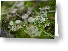 In The Land Of Little Mushrooms  Greeting Card