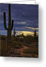 In The Shadow Of The Saguaro  Greeting Card