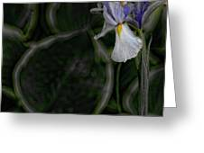 In The Silence Greeting Card