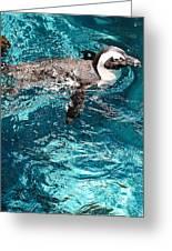 In The Swim Greeting Card