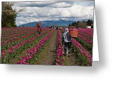 In The Tulip Fields Greeting Card