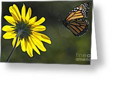 Incoming Monarch Greeting Card