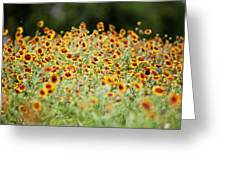 Indian Blankets Greeting Card