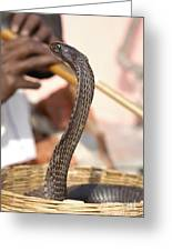 Indian Cobra Greeting Card