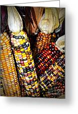 Indian Corn 2 Greeting Card