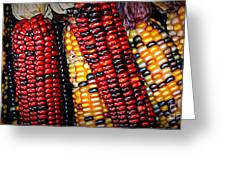 Indian Corn Greeting Card