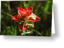 Indian Paintbrush Greeting Card