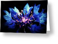 Indigo Bachelor  Greeting Card
