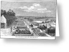 Indigo Manufacture, 1869 Greeting Card