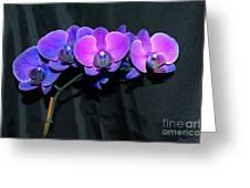 Indigo Mystique Orchids  Greeting Card