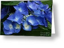 Indigo Greeting Card