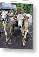 Indonesian Bovine Cart Greeting Card