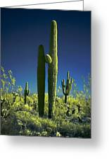 Infrared Saguaro 1 Greeting Card