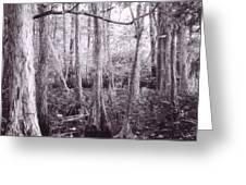 Infrared Swamps Greeting Card