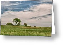 Innisfree Tree 15203c Greeting Card
