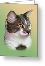 Inquisitive Cat Greeting Card