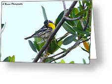 Inquisitive Yellow Throated Warbler Greeting Card
