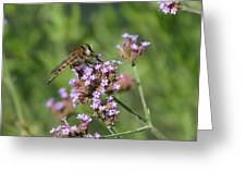 Insect And Flower Greeting Card