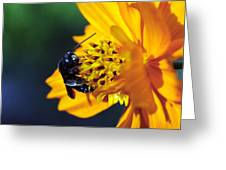 Insect And The Wild One Greeting Card