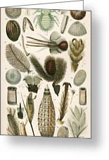 Insect Microscopy, 19th Century Greeting Card