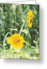 Insect On Sunflowers Greeting Card